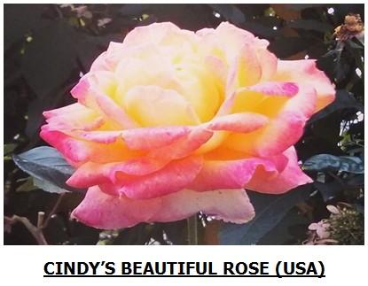 rose48