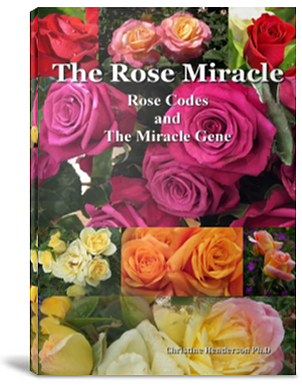Rose-Miracle