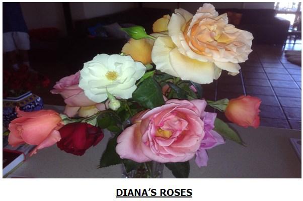 rose113