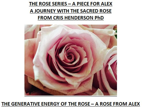 rose11