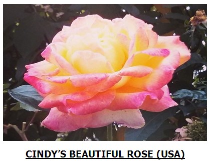 rose117