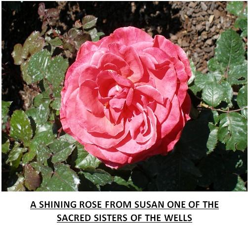 rose43