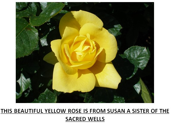 rose47